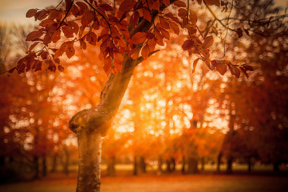 Photograph tree by Adriana K.H. on 500px