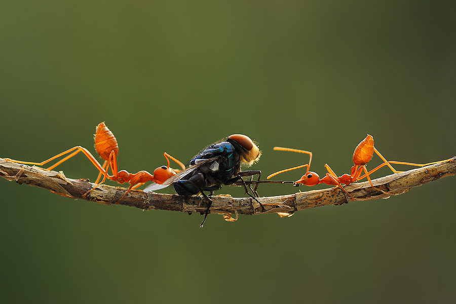 Photograph Mutual cooperation by Vincentius Ferdinand on 500px