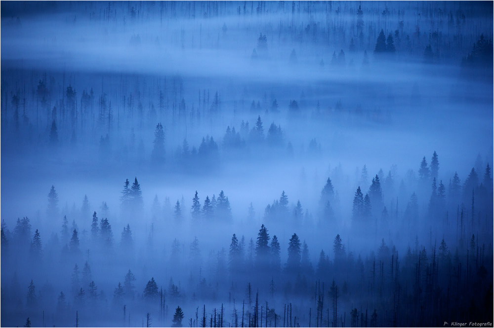 Photograph Fairytale forest by Philip Klinger on 500px