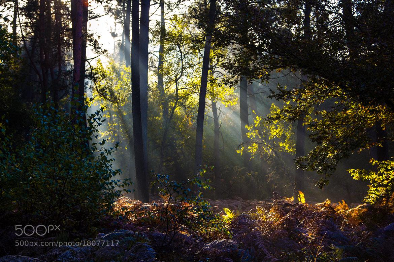 Photograph Sunshine by Pierre de Izarra on 500px