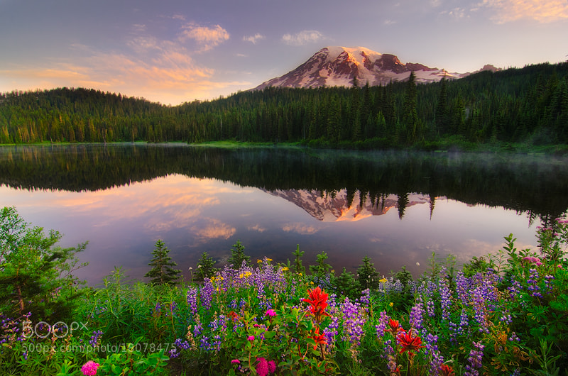 Photograph Rainier Extravaganza by Nagesh Mahadev on 500px