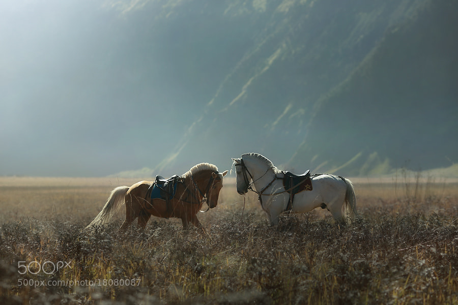 Photograph morning song by asit  on 500px