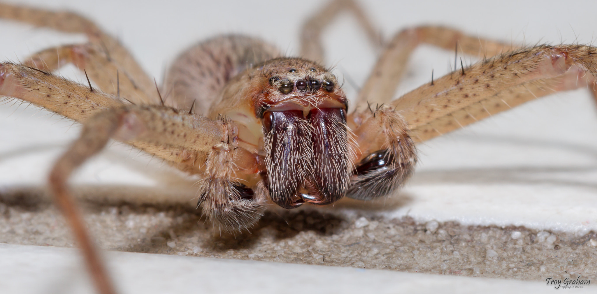 Photograph Huntsman by Troy Graham on 500px