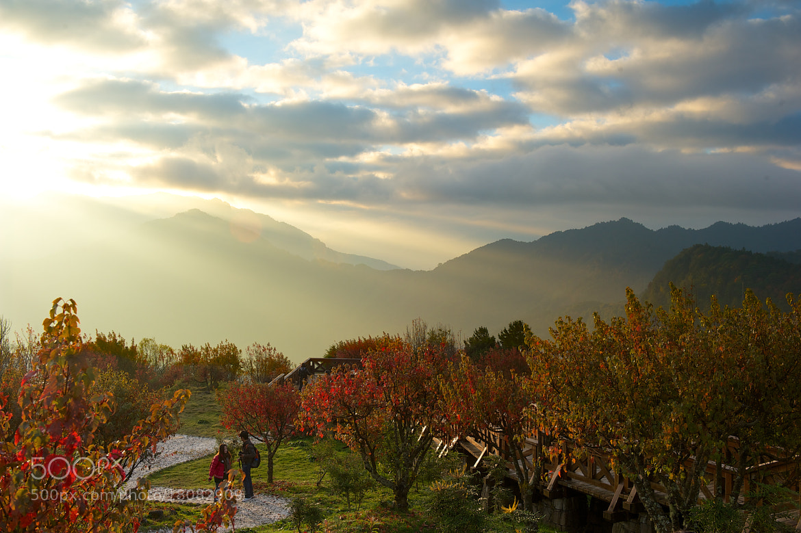 Photograph # Sunrise Alishan by Leif Yung on 500px