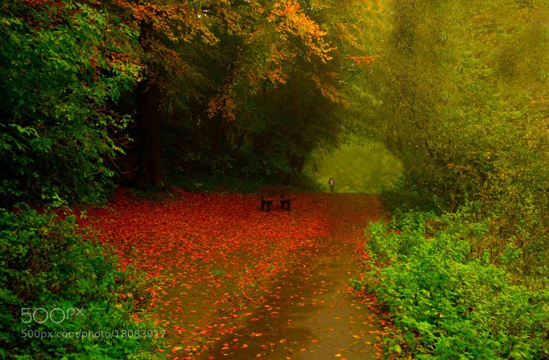 Photograph Walking through Autumn. by Kate Thomas on 500px