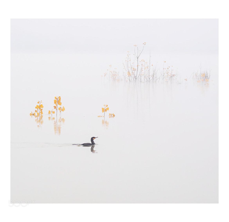 Photograph Saturday morning by Koraljka S on 500px