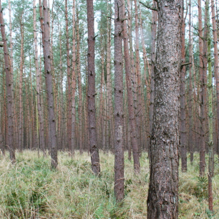 woods, Canon EOS 650D, Sigma 18-50mm f/2.8-4.5 DC OS HSM