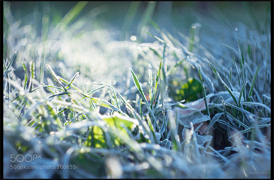 Photograph hoarfrost by restive wench on 500px