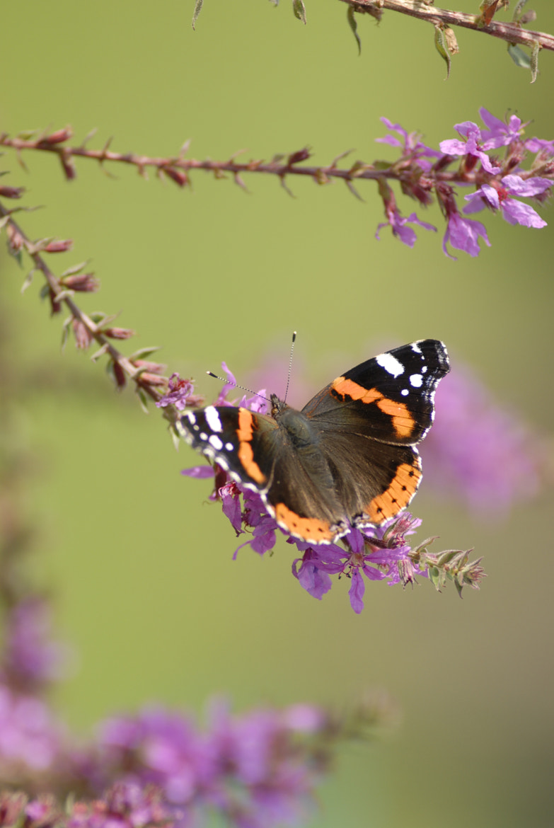 Photograph Butterfly  by Harry de Visser on 500px