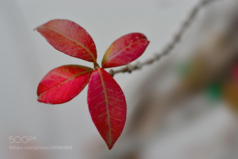 Photograph autumn star by Pilar Bau on 500px