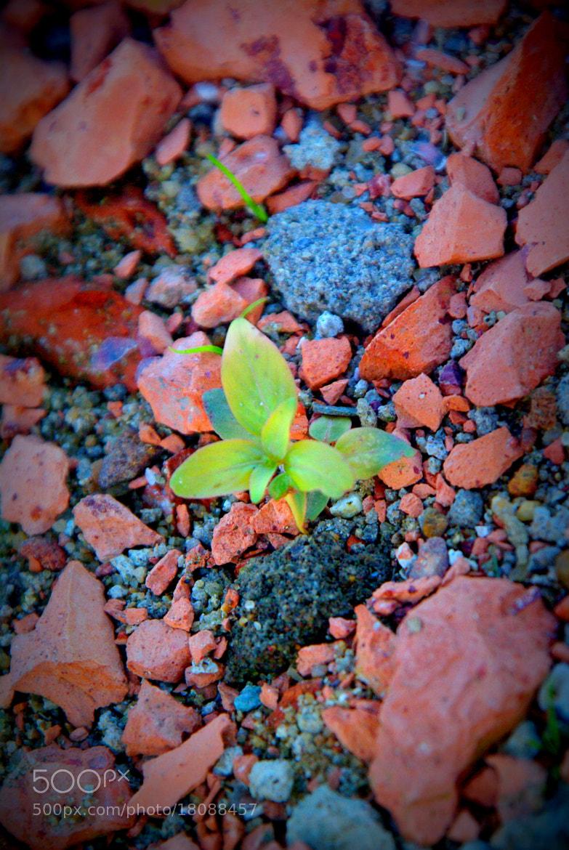 Photograph Germ 1 by Lê Đình Quân on 500px