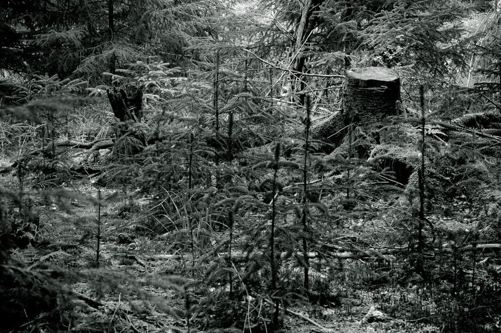 Photograph Black and White in the forest by Sebastian Fandler on 500px