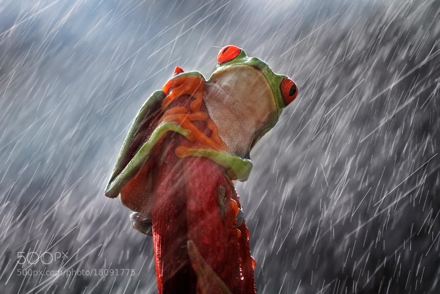Photograph heavy rain by shikhei goh on 500px