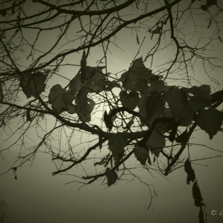 last leaves, Nikon COOLPIX L31