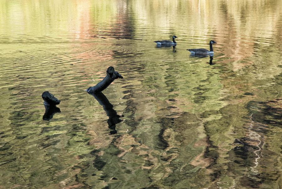 Rydal reflections