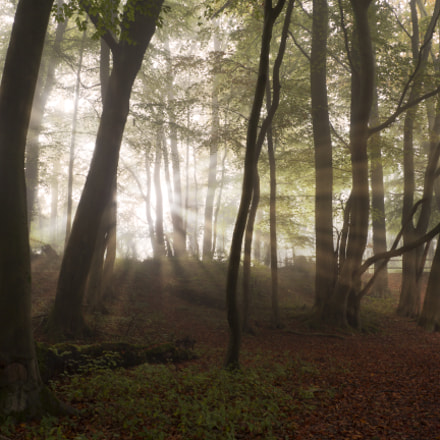 Through the trees, Canon EOS 60D, Sigma 18-125mm f/3.5-5.6 DC IF ASP