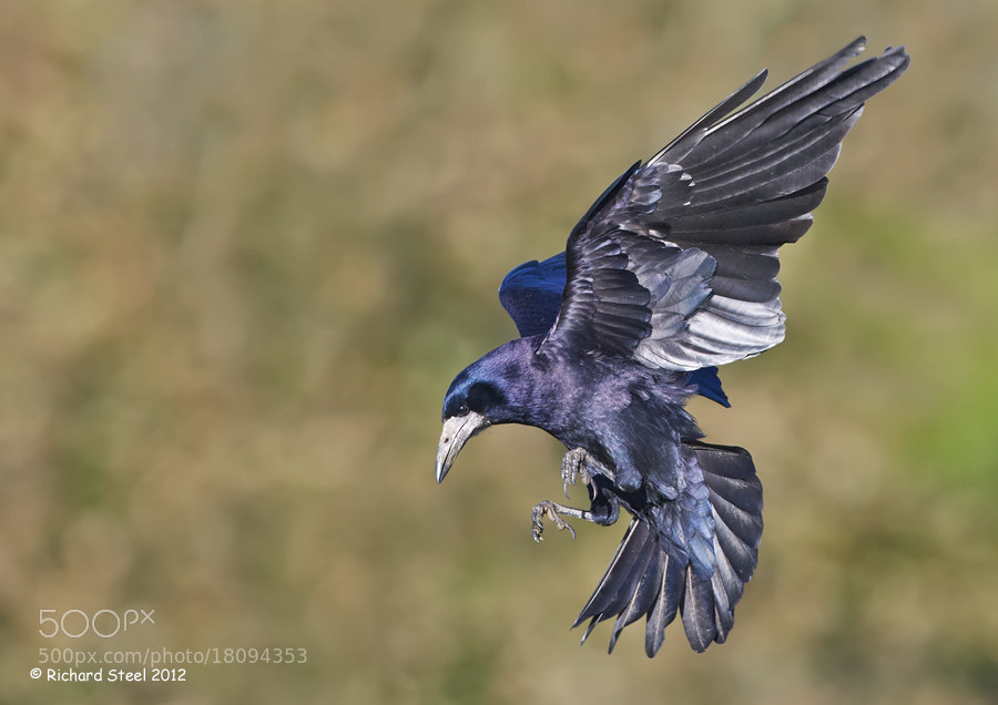 Photograph Flying Iridescence by Richard Steel on 500px