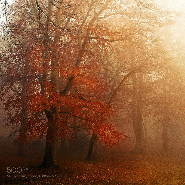 Photograph Autumn mist by Chris Spracklen on 500px