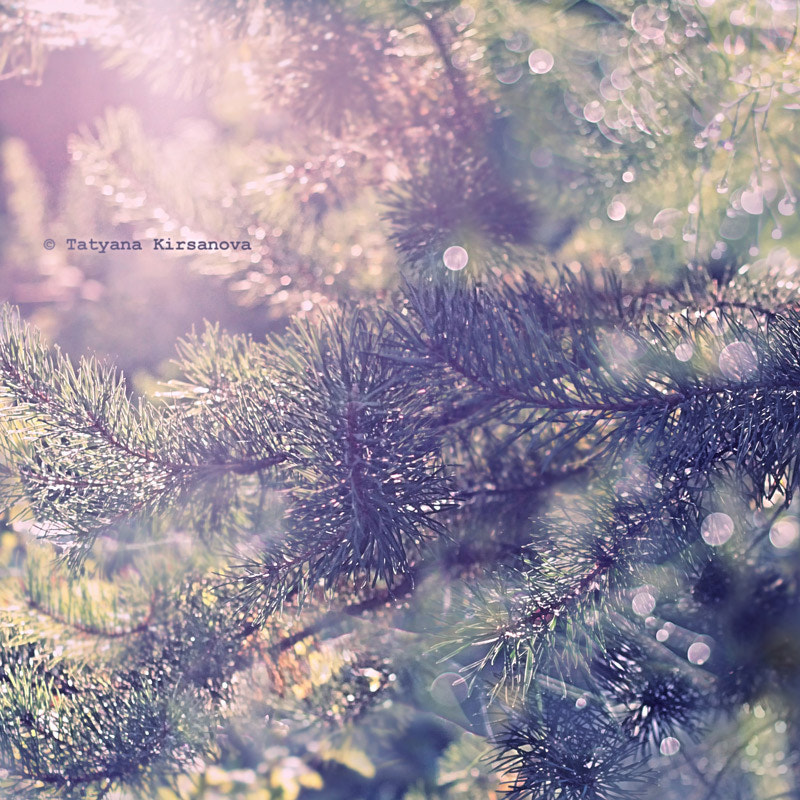 Photograph Fir light by Tatyana Kirsanova on 500px