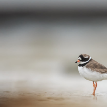 Alone at the beach, Canon EOS-1D X, Canon EF 600mm f/4L IS + 1.4x