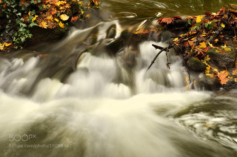 Photograph Autumn Creek by Csilla Zelko on 500px