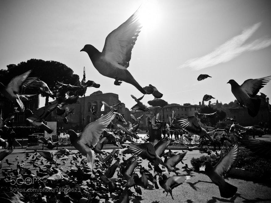 Photograph Take Flight by Walter  Shin on 500px