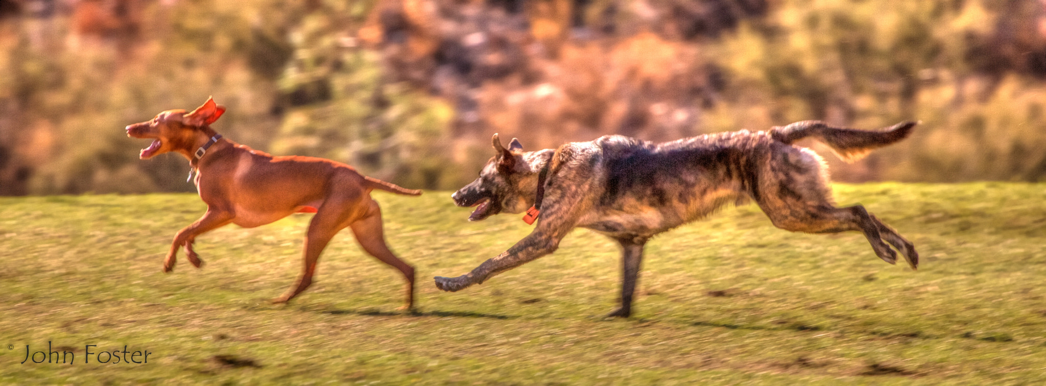 Photograph RUN!!!!!!!!! by John Foster on 500px