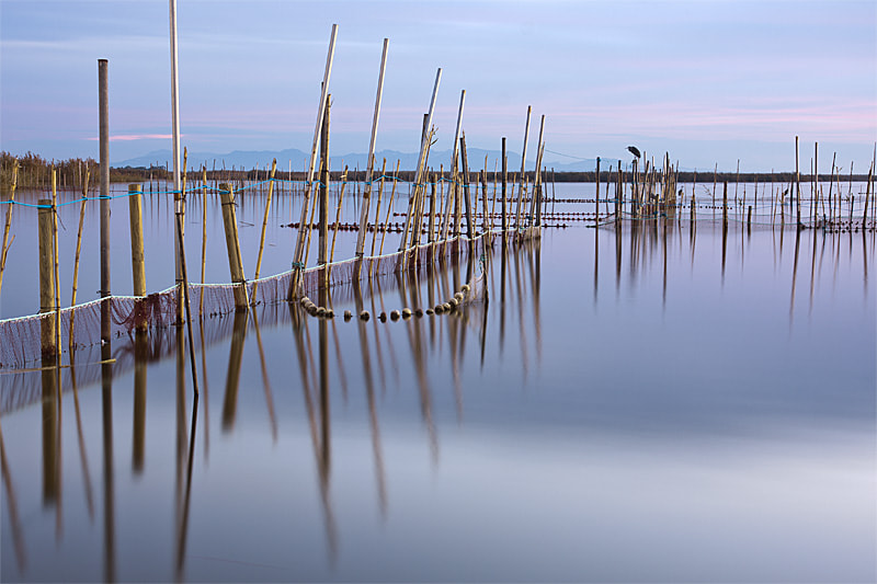 Photograph Cañas en la Albufera by Javi Pardo on 500px
