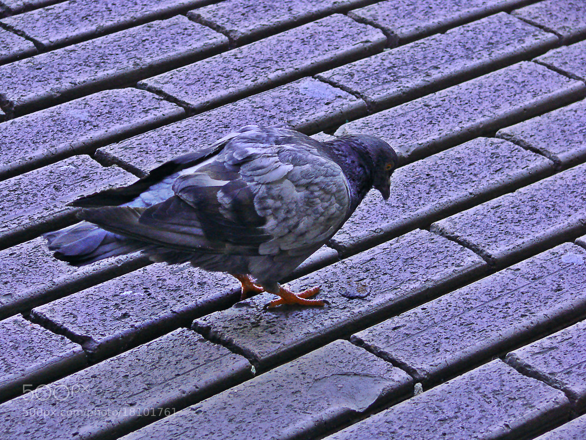Photograph Pigeon street by Evan Vis on 500px