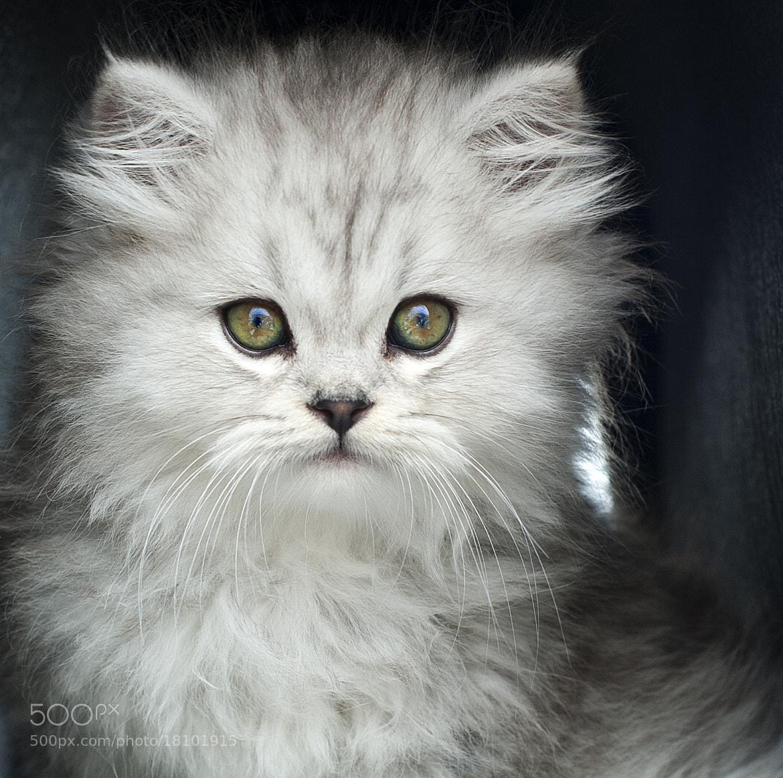 Photograph Little cat by Eduardo Gonzalez on 500px