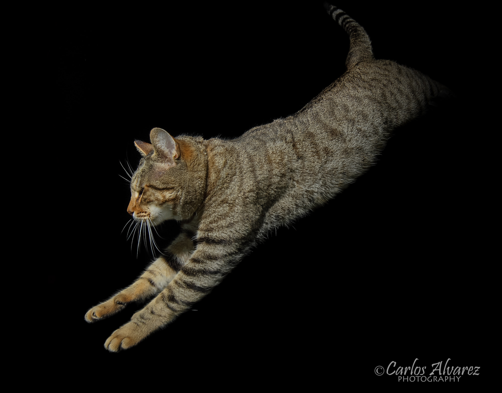 Photograph Shin jumping by Carlos Álvarez on 500px