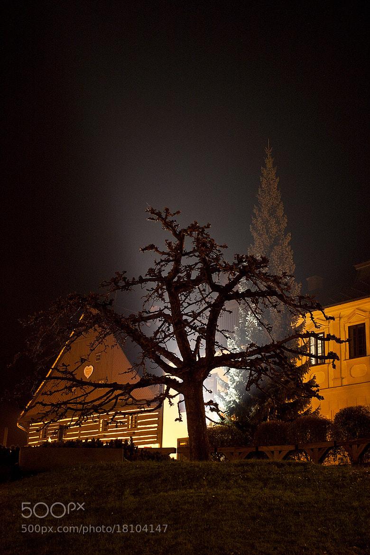 Photograph whiskers tree by Soňa Kovalčíková on 500px