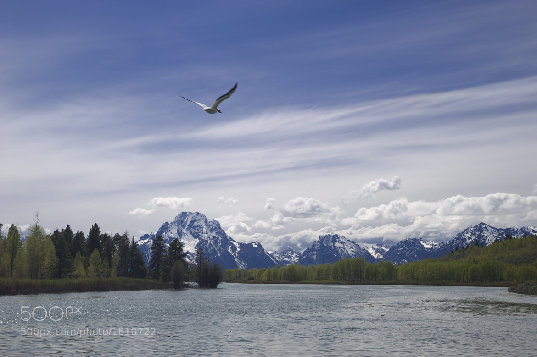 Photograph Grand Teton by Jan Zoetekouw on 500px