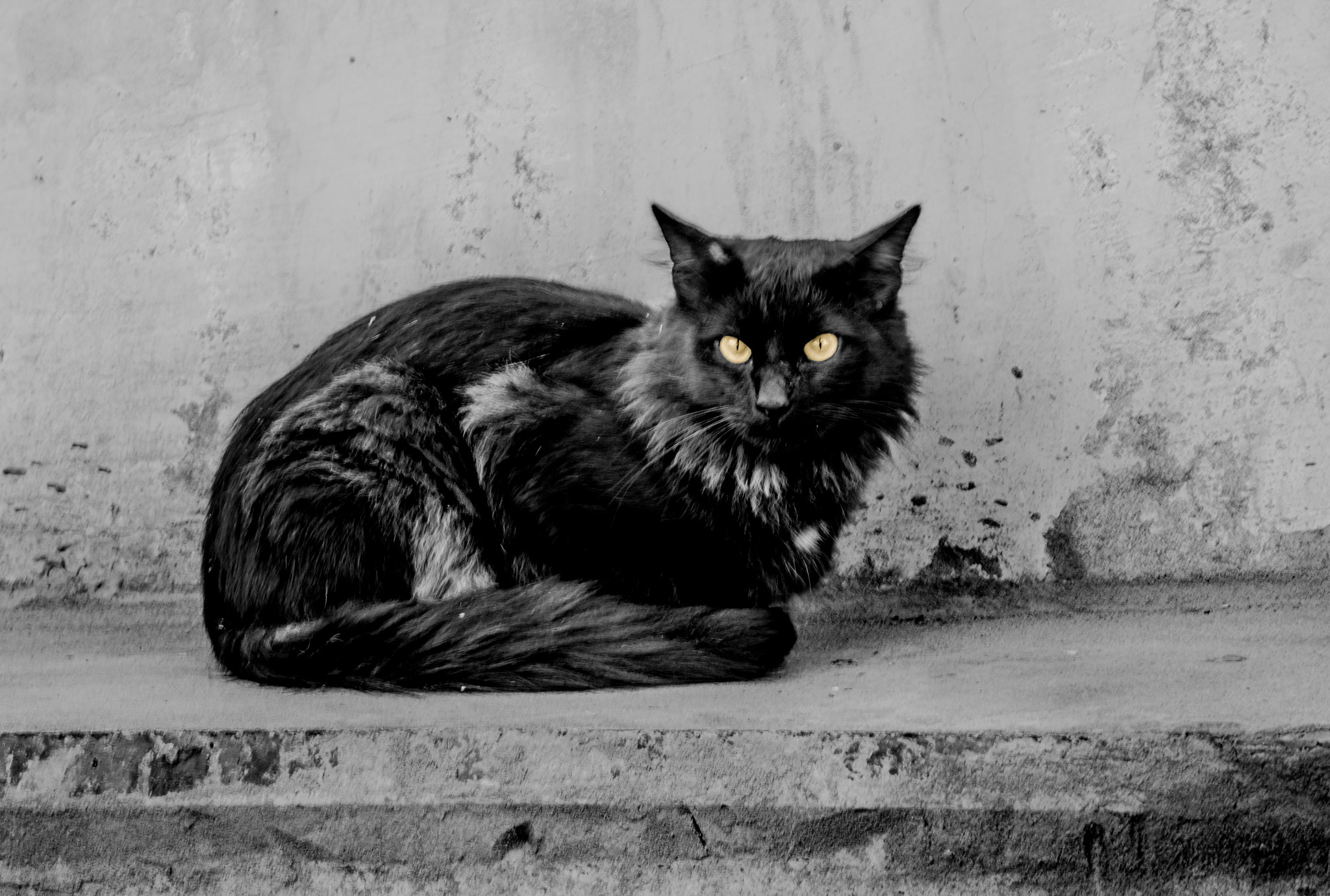 Photograph Cat by Michel Vershinin on 500px