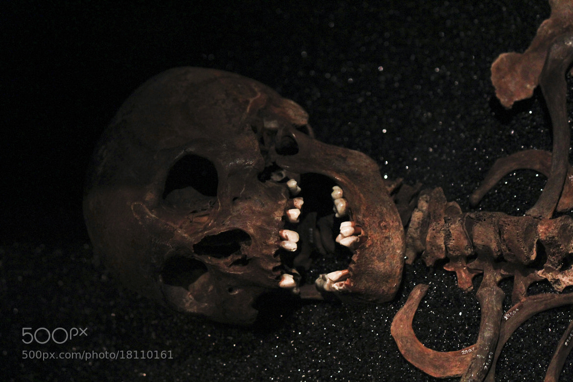 Photograph Bones And Teeth by Niclas Larsson on 500px