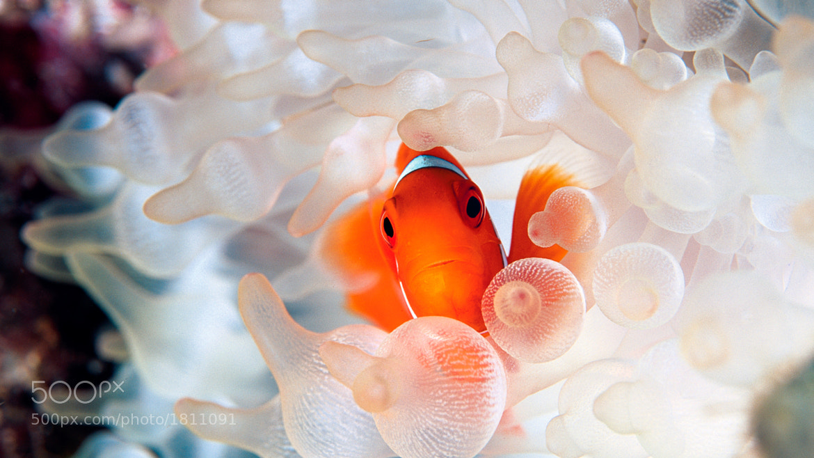 Photograph Nemo by crenk on 500px