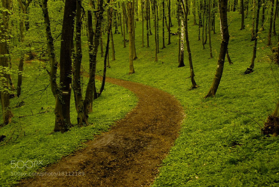 Photograph Path in green forest by Milan Tesar on 500px