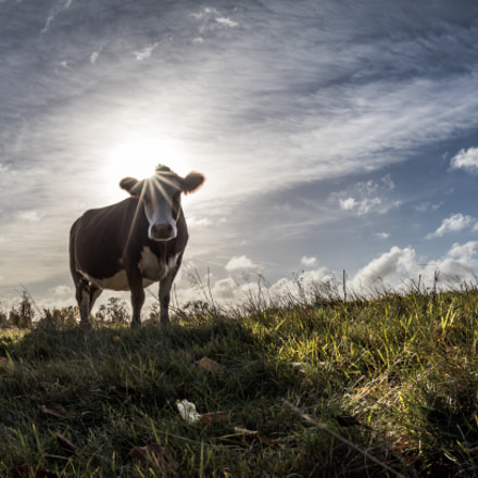 Holy cow A shot, Canon EOS 80D, Sigma 15mm f/2.8 EX Fisheye