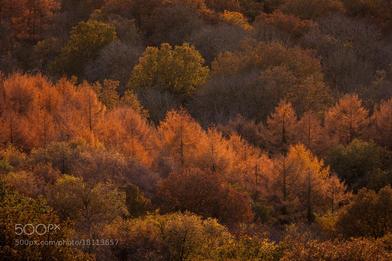 Photograph Autumn Trees by Jon Dyke on 500px