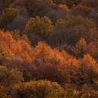 Some of the colours of autumn show through in the trees near Malvern