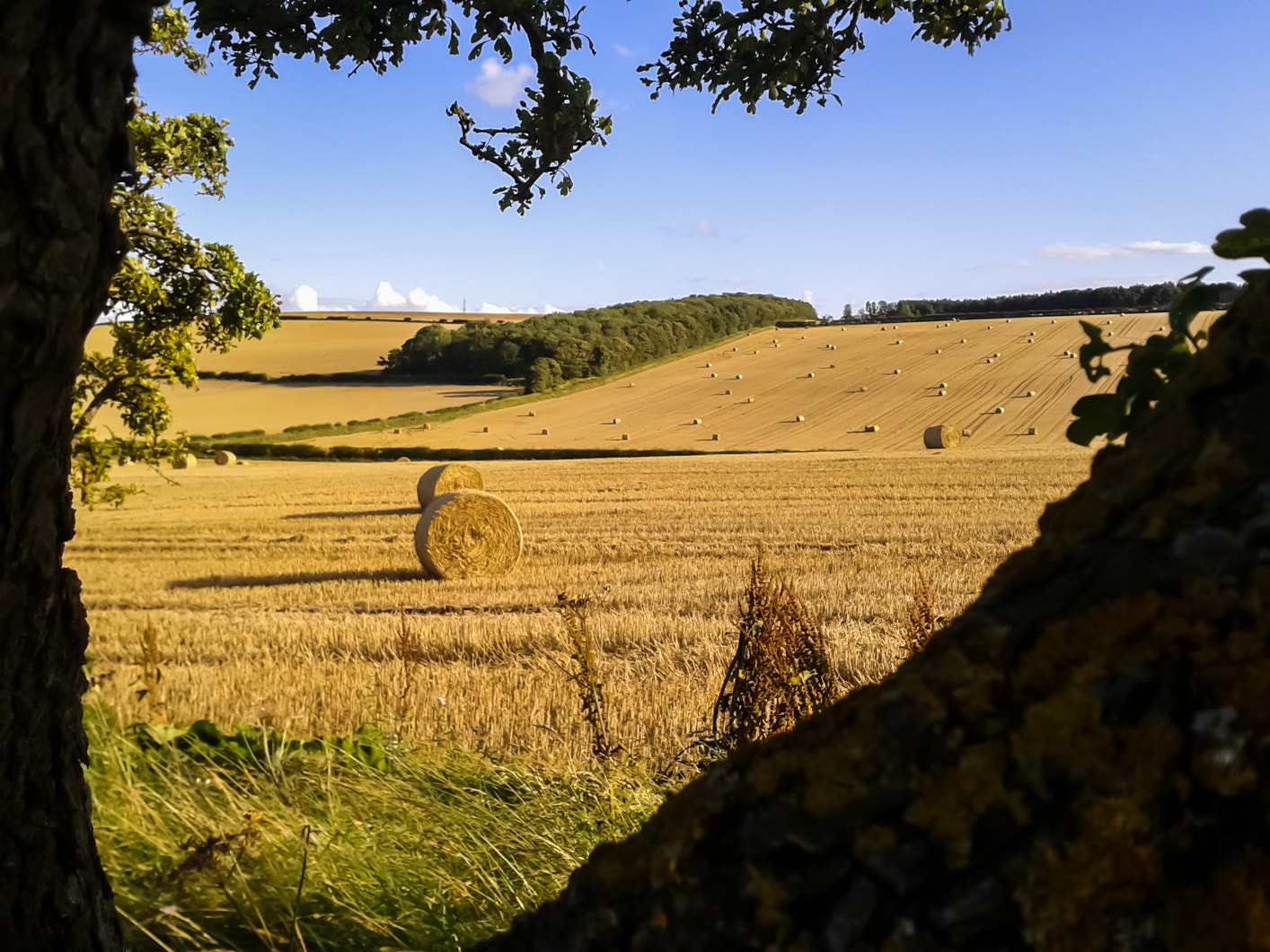 Photograph Scottish field in September by Adam Z on 500px