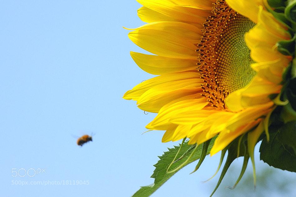 Photograph Obiettivo dell'ape by Stefano Boschi on 500px