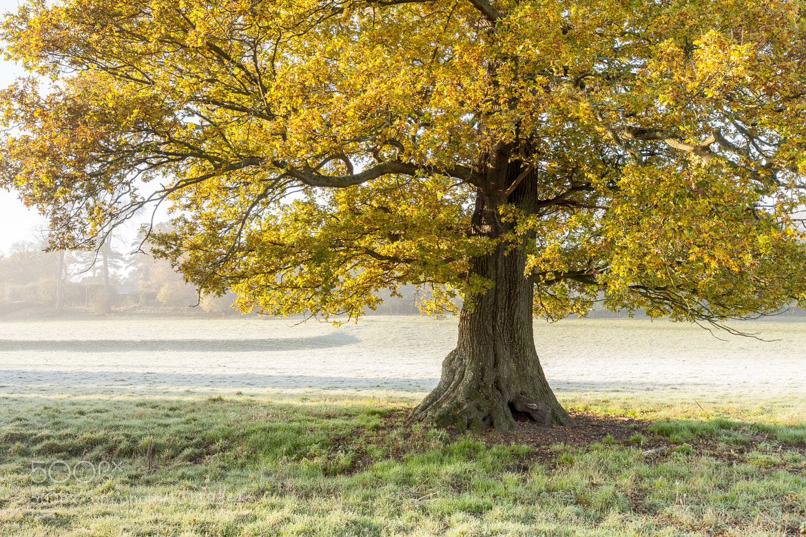 Photograph a Humble tree i by Terry Gibbins on 500px