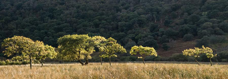 Crummock Tree Pano