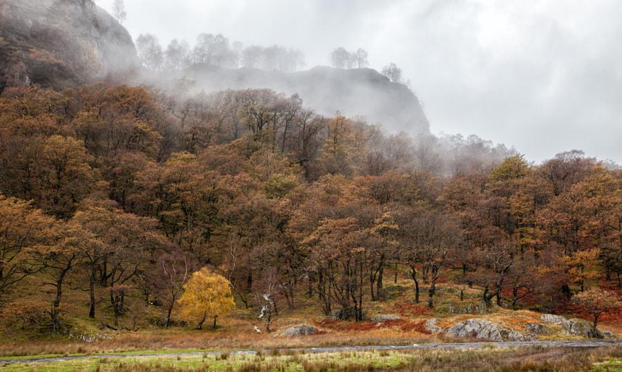 Watendlath Valley Mist