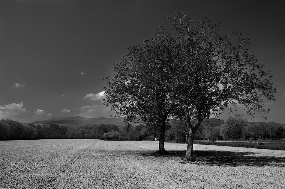 Photograph Guardiani del campo by Stefano Boschi on 500px