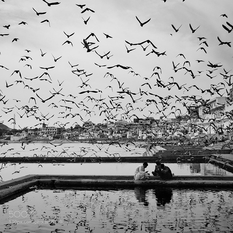 "Photograph The Ghats ""Pushkar"" by Bob Gala on 500px"