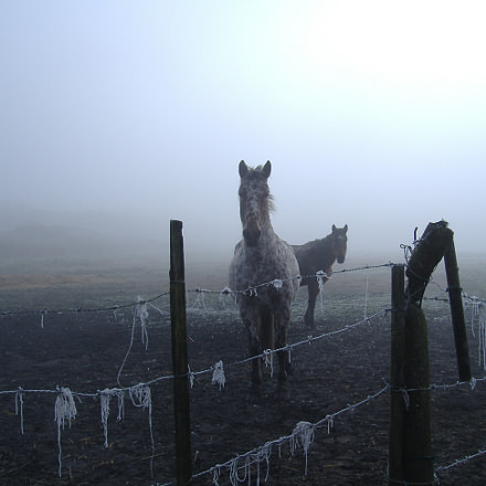 foggy sky and horses, Fujifilm FinePix A370