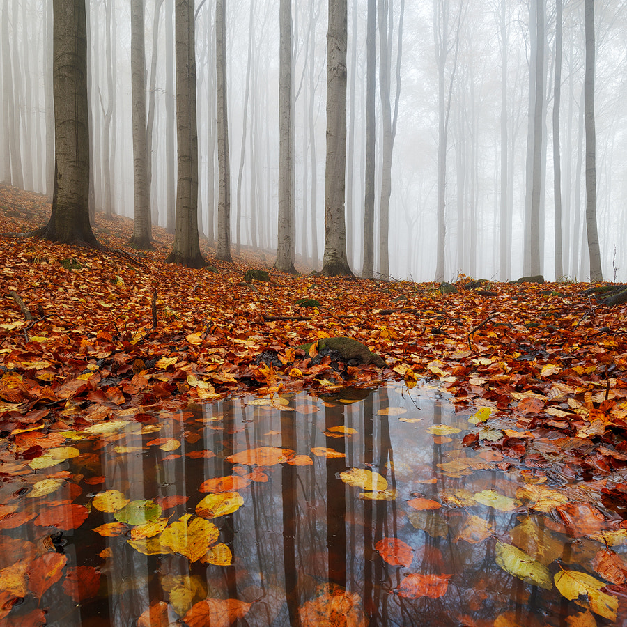 Puddle by Martin Rak on 500px.com
