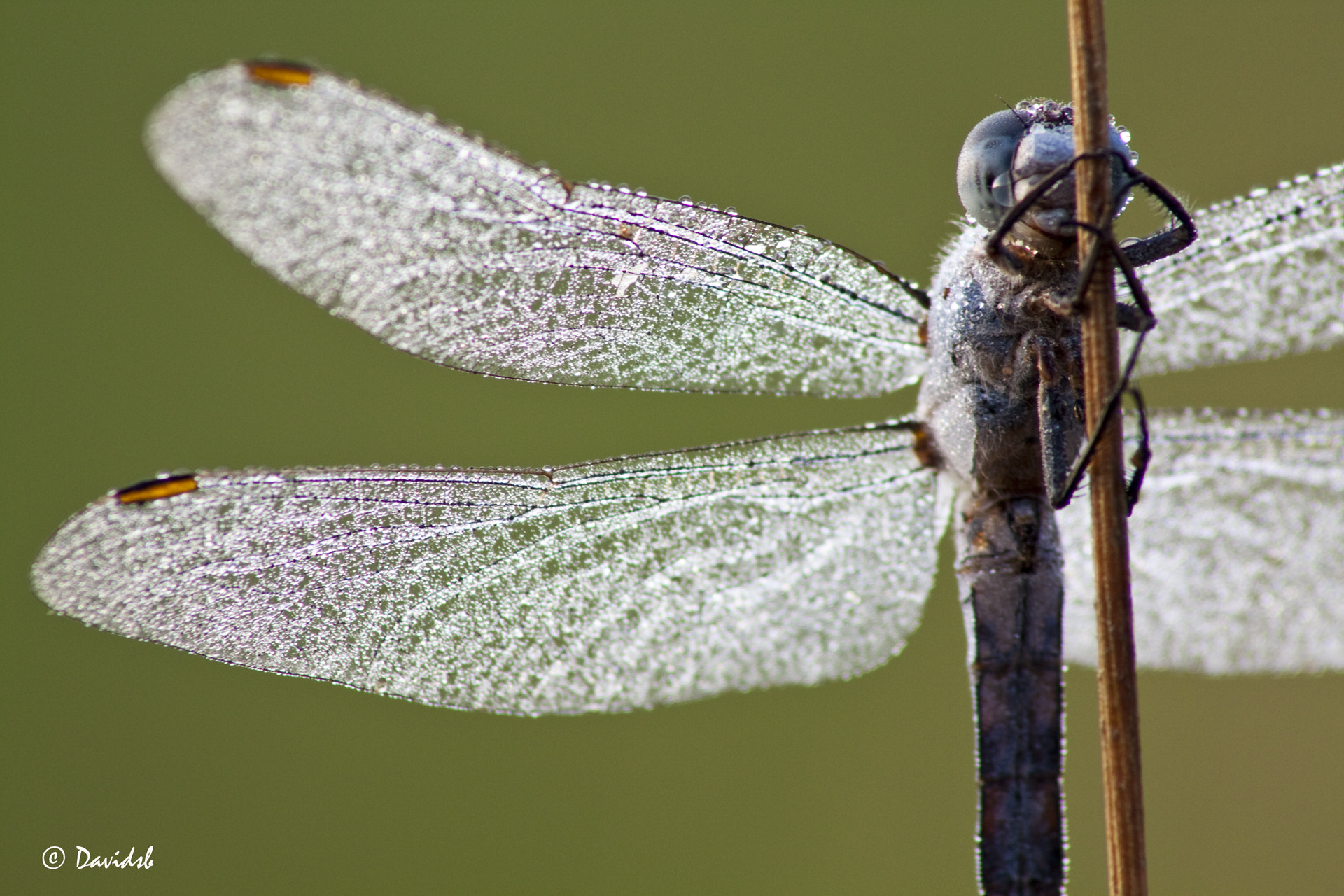Photograph DragonFly by Davide Scuccato on 500px